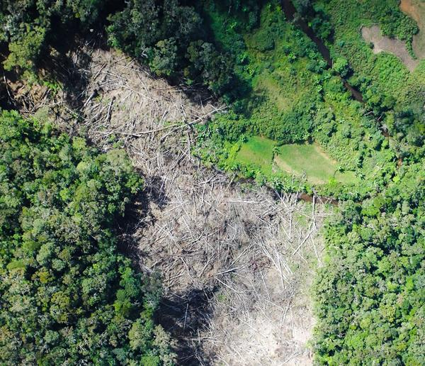 Forest Monitoring with Drones
